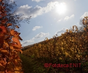 CroppedCopyrightImage180150-MG9747-Vigne-FabriceGallina